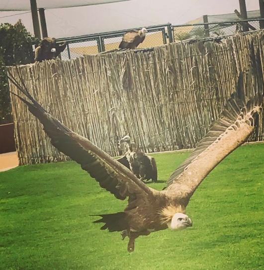 Kalba Bird of Prey Centre